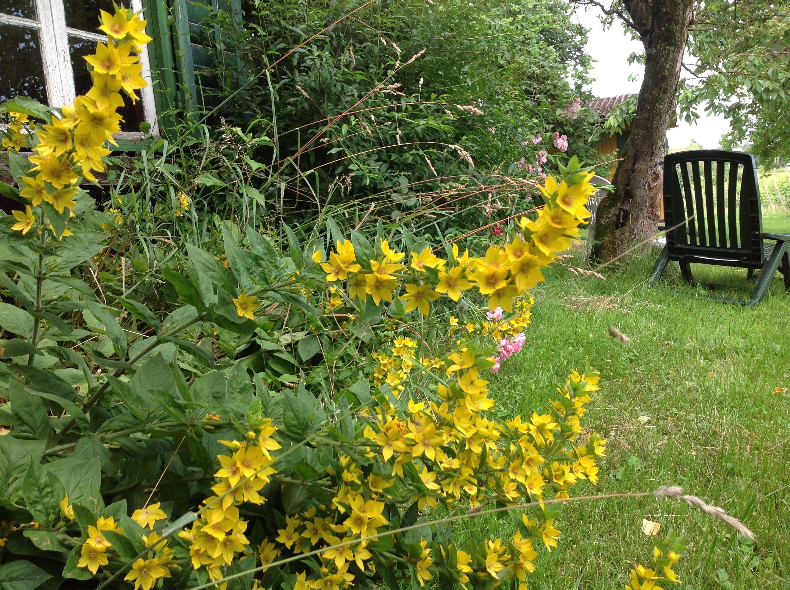 Gelbe Blumen Im Garten Bodenseeheim Christlicher Wissenschaftler Ev